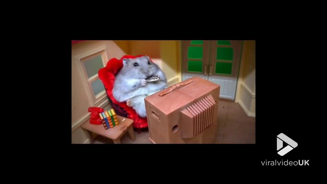 Hamster Tv
