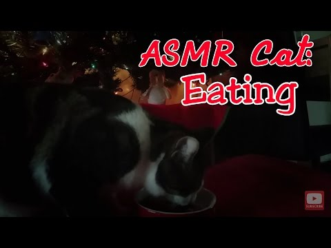 ASMR Cat: Eating under the Christmas Tree (mouth sounds, wet, soft food, purring) (no talking)