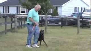 Russ Ebersole (aberdeen Acres Kennel) Violently Jerks Doberman Off Feet