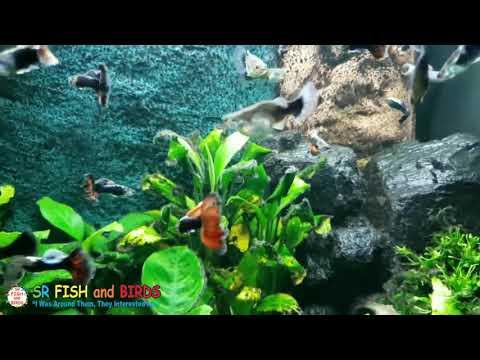 കുമാരേട്ടൻ CASINO TRIP from YouTube · Duration:  8 minutes 17 seconds