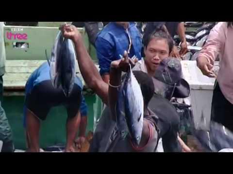 Extreme tuna fishing  Blood, Sweat and Takeaways
