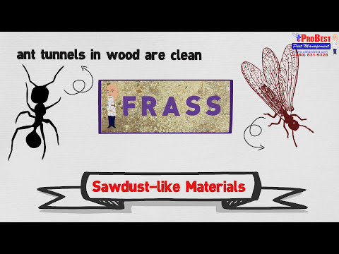 Dr Bugs: How to recognize Ant Infestation - Ant Control in Gilbert Arizona