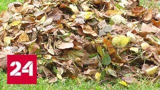 Смотреть видео Мусор или удобрение: правила уборки листьев в этом году могут поменять - Россия 24 онлайн