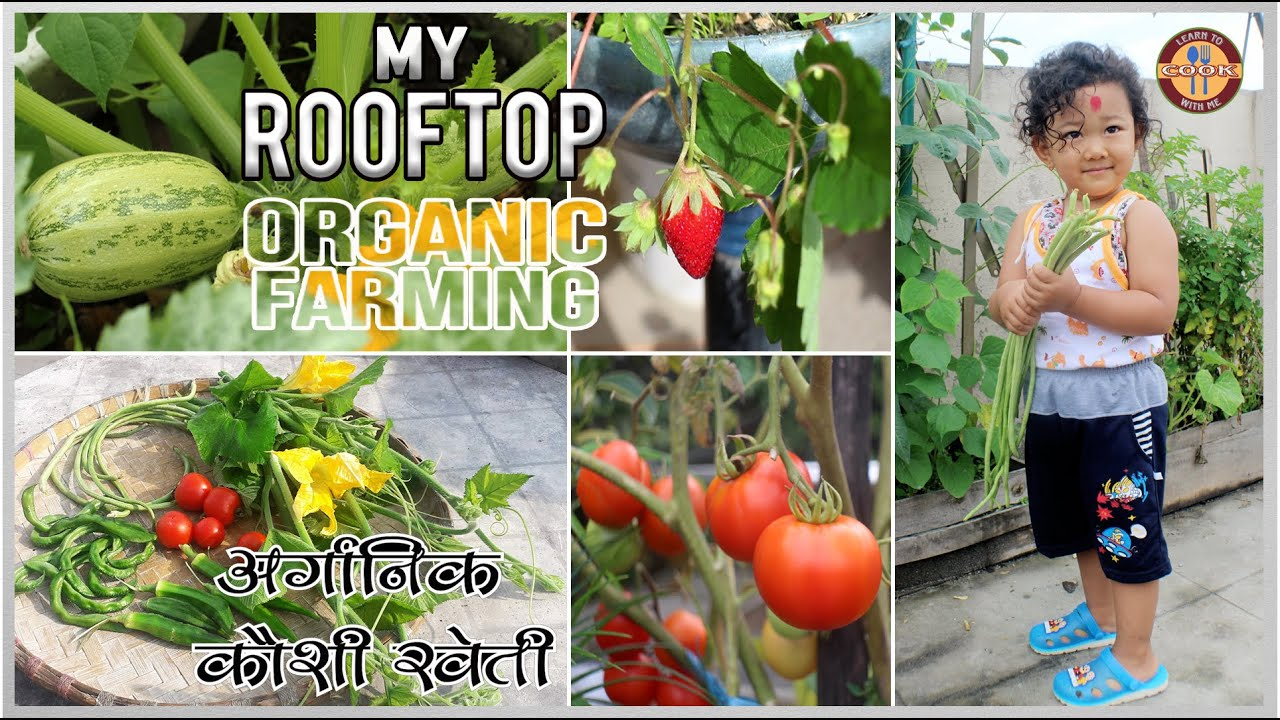 MY ROOFTOP ORGANIC FARMING | मेरो अर्गानिक कौशी खेती |Organic Fruits & Vegetables You Need to be Eat