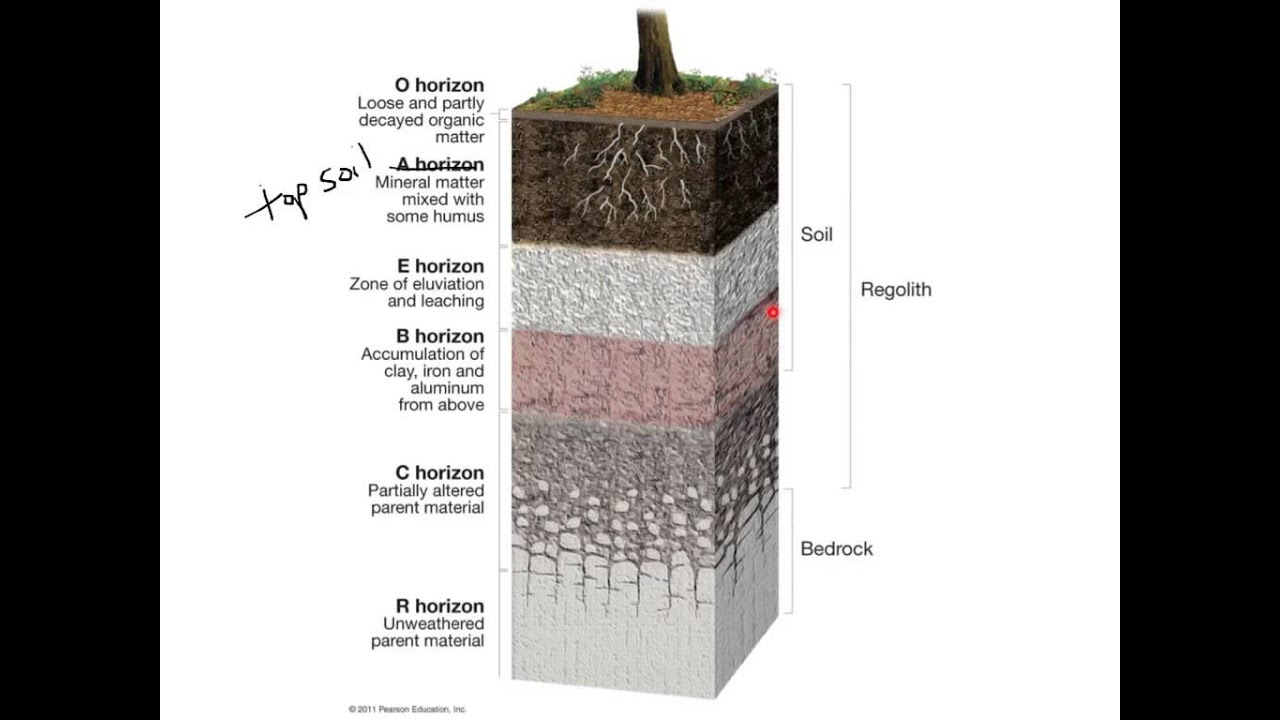 Soil horizons youtube for What is soil