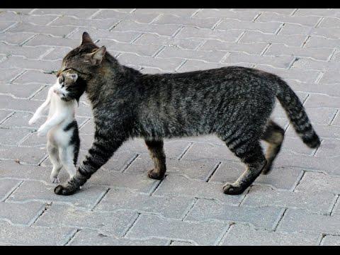 злые фото котят