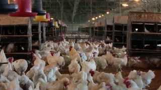 Asia Business Channel - Mindanao (Ana's Breeders Farms)