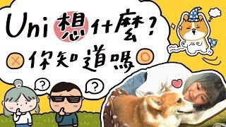 全台手播 [邵庭Vlog#25] 生病的愛犬Uni在想什麼 #寵物溝通
