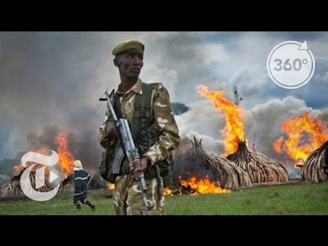 Kenya Burns Millions of Dollars in Ivory | 360 VR Video | The New York Times