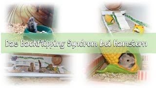 Das Backflipping Syndrom bei Hamstern    Tipps + Informationen
