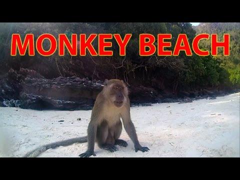 Funny Monkey On The Beach Thailand Trip 2014 Day 13 Youtube
