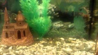Мой аквариум(, 2014-12-07T19:03:35.000Z)