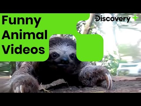 मजेदार Animal वीडियो | Funny Animal Videos | Animals Mess With The Camera | Discovery Plus India
