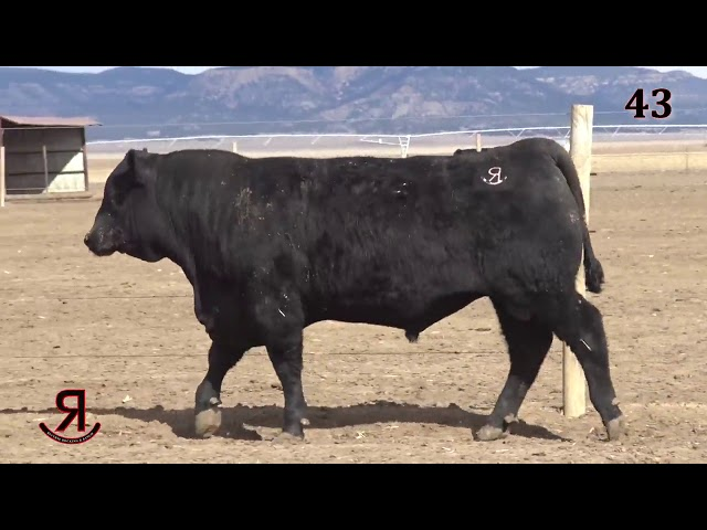 Reverse Rocking R Ranch Lot 43