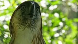 The Philippine Eagle and his Keeper