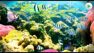 Die Korallenriffe der Cayman Inseln - Tierdoku Dokumentation deutsch  in voller Länge HD 2018