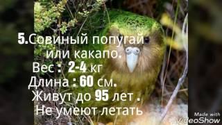 Топ 5 самых больших попугаев мира!!!!!!