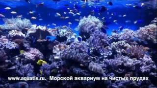видео Океанариум на Чистых прудах в Москве