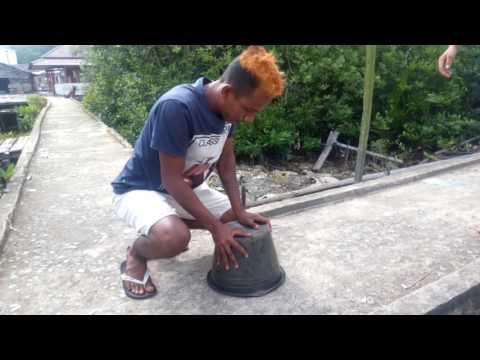Degel Buda' Nangkap tai kucing