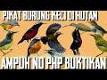 Pikat Burung Kecil No Php Jaminan Dapat Burung Lengket Parah Habis  Mp3 - Mp4 Download