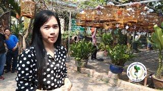 Repeat youtube video แข่งนกเวียดนาม