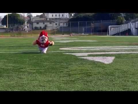 Munchkin the Teddy Bear plays football