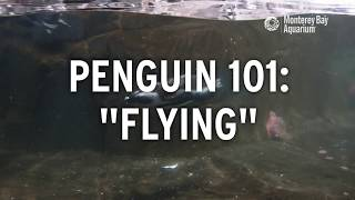 Do Penguins Fly? | Penguin 101