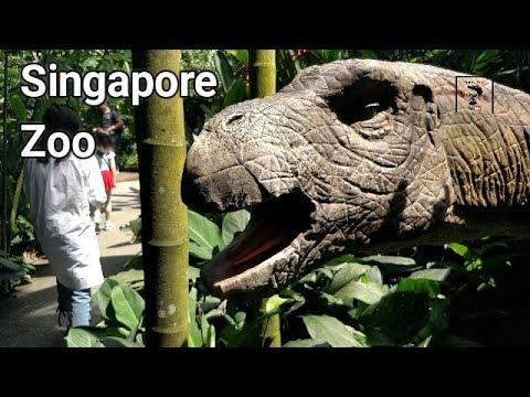 Singapore Zoo | Day 3 | Night Safari | Travel | VBO Vlogs | Adventure | Thrill | 2017
