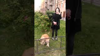 Выгул собак в центре Санкт-Петербурга . ул. Достоевского + Загородный проспект 19 00