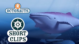 Octonauts: Mystery Sea Creature