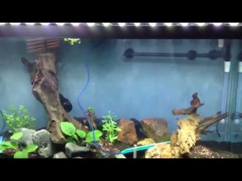 90 Gallon Fishless Cycle: Nitrites Have Arrived