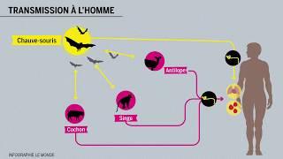 Tout savoir sur le virus Ebola en 5 minutes