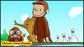 Curioso come George 🐵Lungo il Fiume con le Anatre 🐵Cartoni Animati per Bambini 🐵George la Scimmia