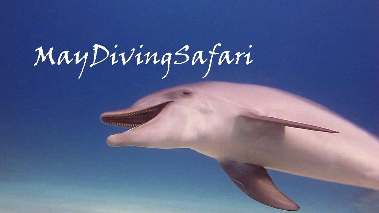 Секс и размножение дельфинов онлайн
