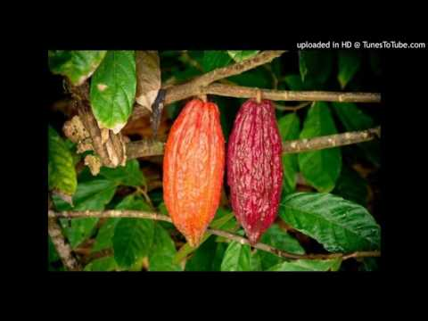 Agrobuzz - Jamaica's cocoa and chocolate industry - February 8, 2017