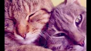 у кошек есть сердце и душа