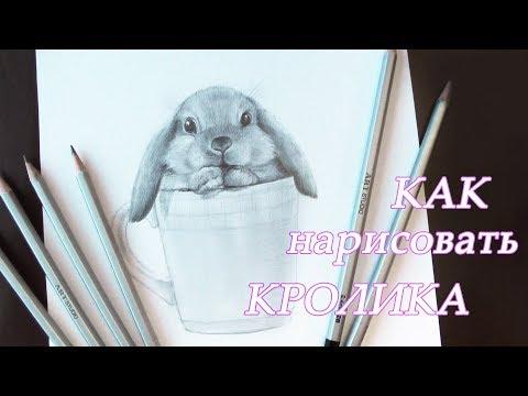 Как нарисовать кролика карандашами Уроки рисования How to draw a rabbit   Art School