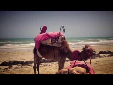 Tunisia. Travel. Тунис. Путешествие