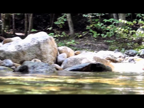 Longneck - I love money (Official Music Video)