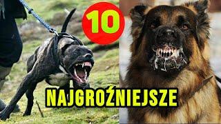 10 Najgroźniejszych psów na świecie