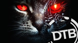 Excision & Downlink - Robo Kitty
