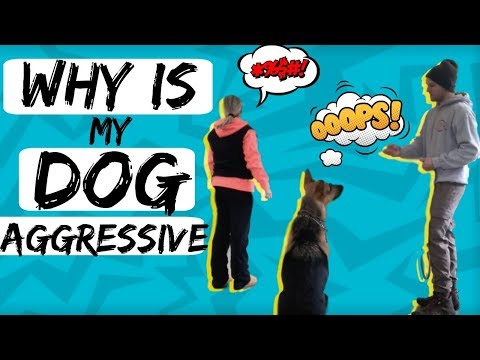 How to Stop Fear based Aggression-Fearful Dog Training with a German Shepherd Dog