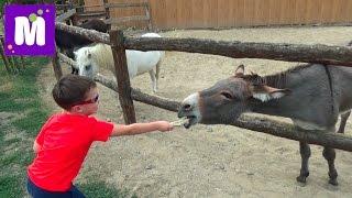 Ранчо Дядюшки Бо гуляем и кормим домашних животных Uncle Bo rancho walk and feed pets