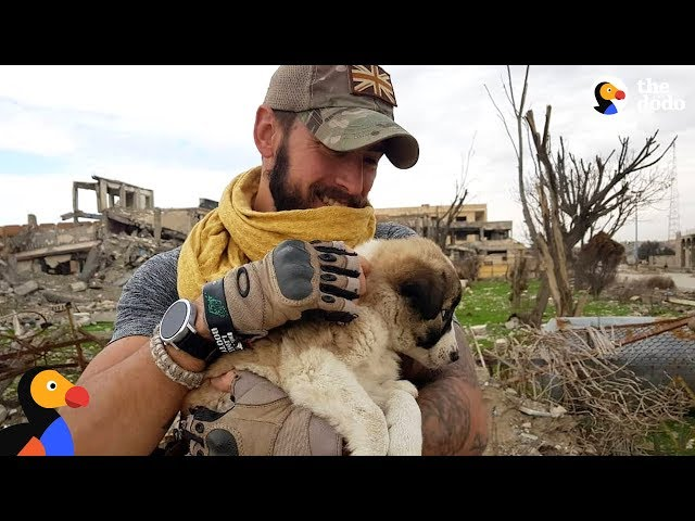 Soldier Saves Puppy Then Realizes He Cant Live Without Her | The Dodo