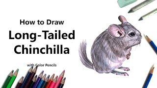 How to Draw a Long-Tailed Chinchilla with Color Pencils [Time Lapse]