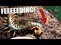 FEEDING THE DEVIL #2 - Slow motion edition! - FEED VID #1