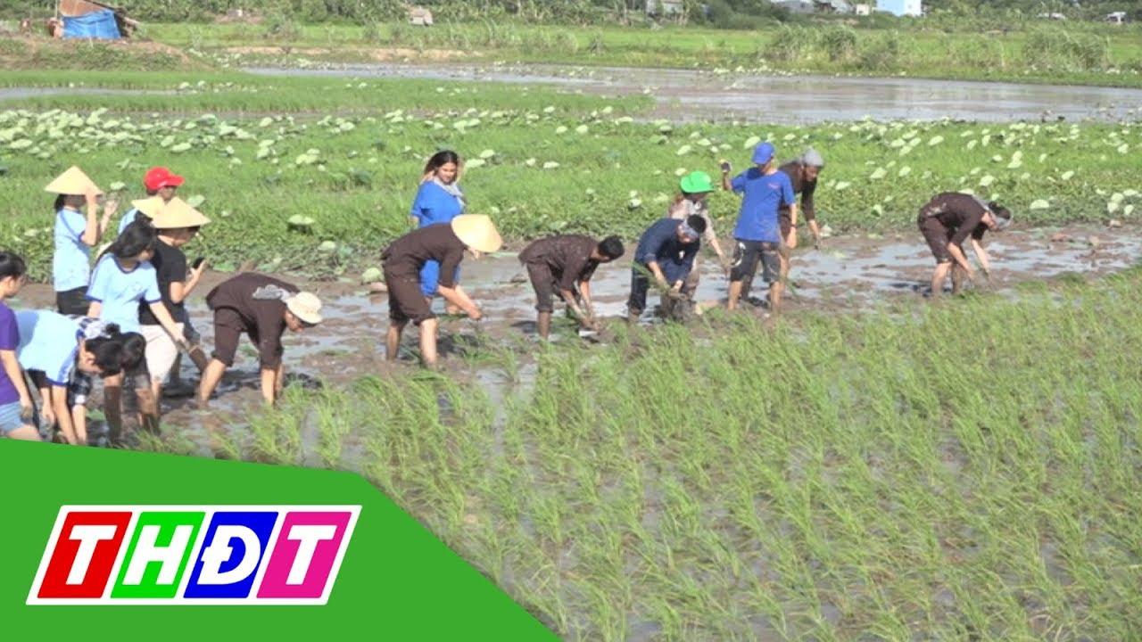 Việt Mekong Farmstay du lịch trải nghiệm văn hóa nông nghiệp | THDT