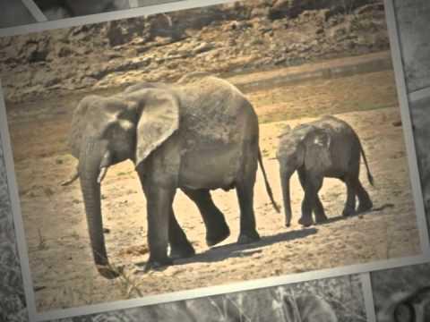 Safari Serengeti with Overseas Adventure Travel, 2010