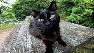 テーブルの上で寝ていた黒猫をモフモフする