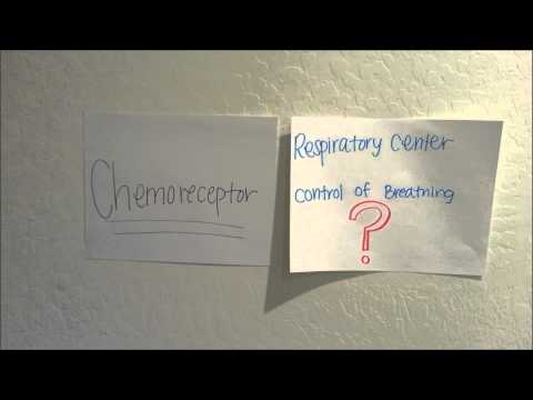 chemoreceptor control of breathing